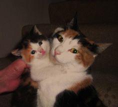 MAMA AND KITTEN!!