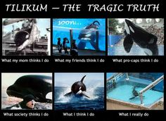 The tragic truth about Tilikum, one of many orcas trapped in captivity