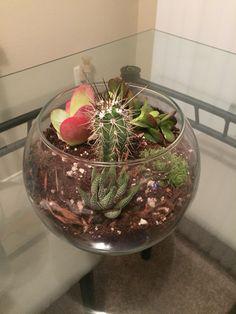 Terrarium fun! Used a fishbowl, quartz on the bottom, and cactus soil!