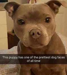 Dog Memes Of The Day 32 Pics - # Animal Memes # Hundememes - Lovely Anime . Baby Animals Pictures, Cute Animal Photos, Funny Animal Pictures, Hilarious Pictures, Animals Dog, Funny Photos, Cute Animal Memes, Animal Jokes, Cute Funny Animals