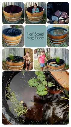 Loving my frog pond! A great way to create #homesfornature in your garden.