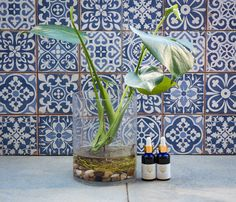 Pomegranate Seed Oil, Glass Vase, Plants, Home Decor, Decoration Home, Room Decor, Plant, Home Interior Design, Planets