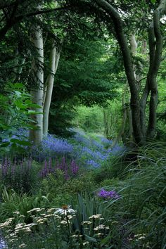 path hidden at the bottom of a swale lined with flowers, upper storey of black and white tree trunks (Woodland Garden 15 - fancydecors)