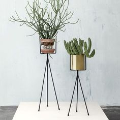 Create sculptural indoor displays with your plants using these simple, modern plant stands. Can be used with our large Brass Hexagon pot or any standard plant pot. These plant stands are made of iron with powder coating, and are available in two sizes.Size: 13 x 50 cm   Material: Iron wire with powder coatingIndoor use only