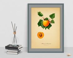 Botanical Vintage art decor poster of apricot picture antique home print wall living room old image cubicle decor drawing watercolor art Apricot Lane, Old Images, Botanical Wall Art, Cubicle, Wall Prints, Vintage Art, Watercolor Art, Art Decor, Living Room