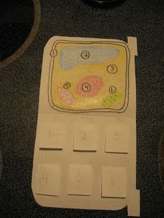 "Science Notebooking ""Cell"" Phone  page with flaps to label the parts of a cell."