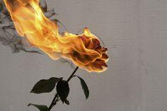 Wallpaper minimalistas laranja Ideas for 2019 Burning Flowers, Burning Rose, Aesthetic Roses, Orange Aesthetic, Aesthetic Indie, Landscape Illustration, Illustration Art, Rose On Fire, Images Esthétiques