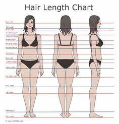 Hair Length Chart - The different hair lengths