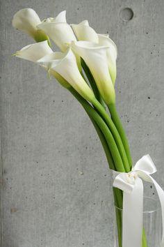 花カラー - Google 検索