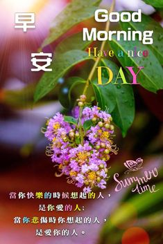 Good Morning, Greed, Plants, Chinese, Good Day, Buen Dia, Bonjour, Plant, Planting