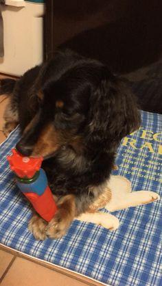 破壊王タケル 人参のおもちゃを破壊中