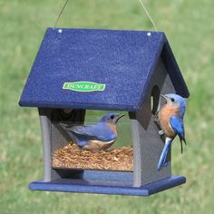 Duncraft Fly Right Inn Bluebird Feeder: Give bluebirds free rein to eat as many live mealworms as they please. Feeding area features a tightfitting clearview plastic basin, perfect for the job, measuring 3-1/2 inches deep with no room for writhing mealworms to escape. Made in the USA.