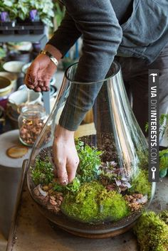 So good - DIY Indoor Gardens - I want that huge terrarium! | CHECK OUT THESE OTHER COOL SHOTS OF Home Decor DIY Projects 2014 AT DIYINTERESTS.COM | #diyinterests #diyprojects #2014 #diy #hammertime #doityourself #fix #creative #home #homedecor #ilovediy #getitdone