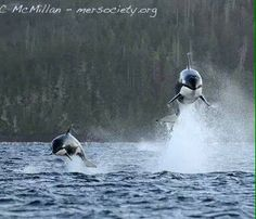 Wow!! Orca
