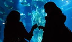 Silent disco at the SEA LIFE London Aquarium