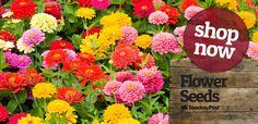 Buy Online Vegetable Seeds in India Flower Seeds Hybrid Herb Seeds India Herb Seeds, Garden Seeds, Food Hacks, Food Tips, Seeds Online, Flower Seeds, Gardening Tips, Floral Wreath, Herbs