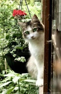 Cat in the cottage window!