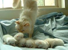 Pile of Fuzzy Little Kittens