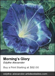 """""""Morning's Glory"""", oil painting by Edythe Alexander"""