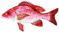 red snapper - Google Search