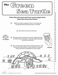 1000+ images about Turtles :) on Pinterest | Sea turtles ...