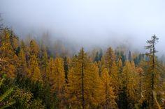 Autumn Forest, Far Away, Austria, About Me Blog, Journey, Mountains, Travel, Viajes, The Journey