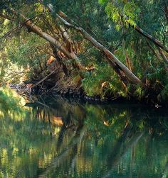 The Jordan river runs along the eastern border of the Holy Land; it holds a special in the history of Israel, because it's important for the Jews and Christians. Jesus Tomb, Jordan Amman, Visit Israel, Pictures Of Christ, Israel Travel, Holy Land, New Testament, Pilgrimage, Saudi Arabia