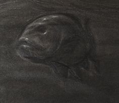 """""""Fish"""" detail symbolic of """"black piety"""" pencil and white conté"""