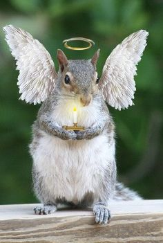 ...angel squirrel...