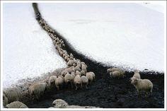 Dima Gomberg The Shepherds way