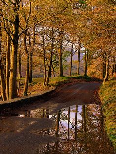SEASONAL – AUTUMN – fall leaves in brilliant colors on a road in coniston lake district, england. Beautiful World, Beautiful Places, English Countryside, Cumbria, Mellow Yellow, Lake District, Belle Photo, Beautiful Landscapes, Places To Go