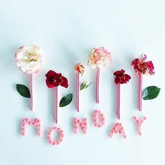 It's Monday again! Get ready for this new week and give your best out of it! Happy Monday :) Image via @kellysnapshappy by weddingdream on Instagram