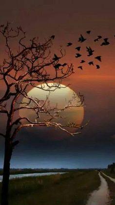 it looks like a beautiful halloween nigh Moon Pictures, Nature Pictures, Pretty Pictures, Beautiful Moon, Beautiful Images, Shoot The Moon, Image Nature, Moon Photography, Photography Tips