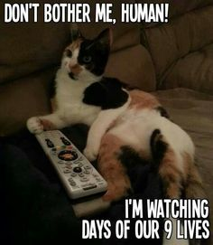 Don't bother me, Human! I'm watching Days of Our 9 Lives