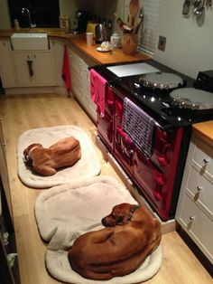 This is not of a photo of my dogs but it looks just like them except our aAGA is green and not yet set up. We even have the same dog beds!!!