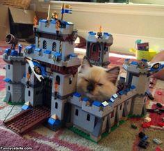 I Has A Castle - funnycatsite.com