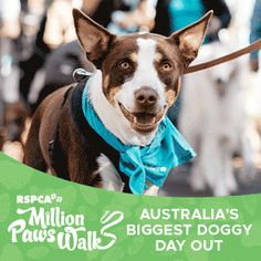 Pawsino Royale February 23 Australian Dog Lover Dog Events In Australia Dogs Day Out Dogs Dog Lovers