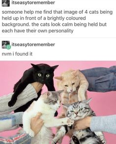 16 Wholesome Memes That Will Inject Your Day With Positivity - World's largest collection of cat memes and other animals Cute Funny Animals, Cute Baby Animals, Funny Cute, Cute Cats, Hilarious, Funny Kitties, Adorable Kittens, Funny Dogs, Cats Tumblr