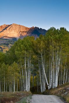 Through the Trees - Telluride - Colorado / Another composition of Sunshine Mesa road. I love how white the aspen boles are in this light. ~ Wayne Boland (wboland) on Flickr