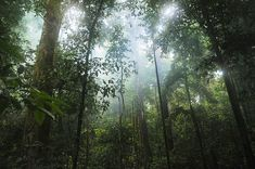 30  Surprising and Innovative Ways For You To Save Rainforests
