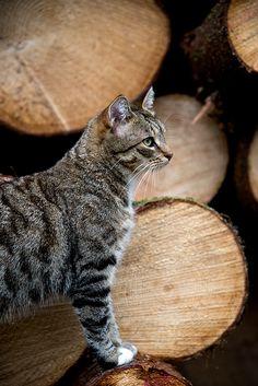 Bratte bakka og grøne lier: Katta