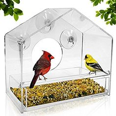 Amazon.com : UPGRADED Window Bird Feeder, Sliding Feed Tray, Large, Crystal Clear, Weatherproof Design, Squirrel Resistant, Drains Rain Water to keep bird seed dry! : Garden & Outdoor