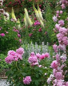 Mottisfont Abbey Garden century - most beautiful rose garden in the UK), Mottisfont Lane, Roms Cottage Garden Plants, Garden Shrubs, Pink Garden, Dream Garden, Garden Landscaping, Love Flowers, Beautiful Flowers, English Country Gardens, Garden Planning
