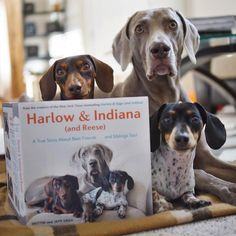 """Happy October 27th! Today our new book: Harlow & Indiana (and Reese) is available wherever books are sold!  You can also get your copy at…"""