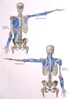 In the tor yu, the hands draw out the spine – as the body sends out the hands. To better understand this interplay, let's examine further the whole body continuities that tether the upp…