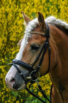 #horses.