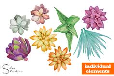 Elements from my Succulents pack on Creative Market