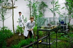 A Negative Garden of Eden: an enclosed garden planted on the first floor of the gallery housed a selection of Belgium's most invasive species. #artgallery