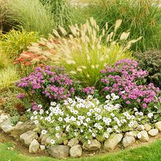 Perfect Partners for Ornamental Grasses. 'Hameln' , a dwarf fountaingrass, crowns a bed of white petunias and 'Purple Dome' aster. The bright white draws your eye to the base of the garden bed in contrast to the grass' crown of tan spikelets. The rust of sedum peeks through from behind the grass.