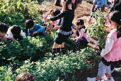 10月28日の午後、子どもたちと一緒にピーナッツの収穫をしました!ピーナッツは千葉県の特産品ですが、どうやって生えているのか知らない人も多いはず!と思い、隣の公園に遊びに来る子どもたちを呼んで、一緒に収穫体験をしました。どれがピーナッツの葉か見分けられない子もいましたが、「せーの」で株を引き抜くと、土にもぐっていた実が現れて、「おー!」という歓声が上がりました。ちゃんと実になっていてこちらは一安心。「へー、ピーナッツってこんな風になってるんだぁ〜」というお母さんの声もあったように、私たちを含め大人でもどの野菜がどうやって育つのか知らない人も多いなか、まちの中でこういったことができるのは子どもだけでなく、大人にとっても学びの場になるなーとつくづく思いました。【写真は堀隼基くんが撮ってくれました】We harvested peanuts with the children who often play in the park next to HELLO GARDEN.Chiba is known as the most peanuts produce prefecture…
